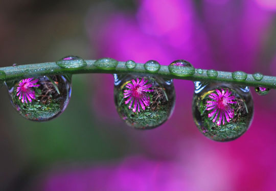 water droplet photography reflected - photo #16