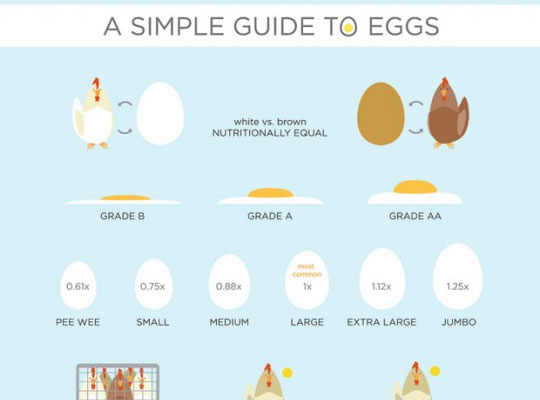 3-a-simple-guide-to-eggs